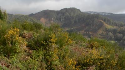 Consulta Pública: Parque Solar Fotovoltaico do Loiral II