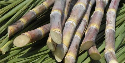 Produção de Cana-de-Açúcar  - 0,27 €/Kg